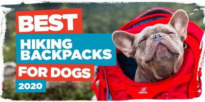 best-hiking-backpacks-for-dogs